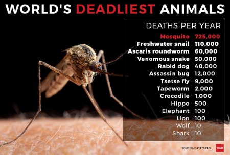 mosquito caused deaths per year