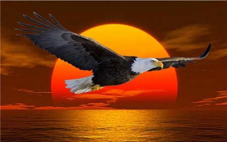 eagle sunrise.jpg