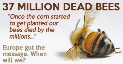 bees-found-dead-elmwood-ontario-canada-large-planting-gmo-corn-seed-treated-neonicotinoid-pesticides.jpg