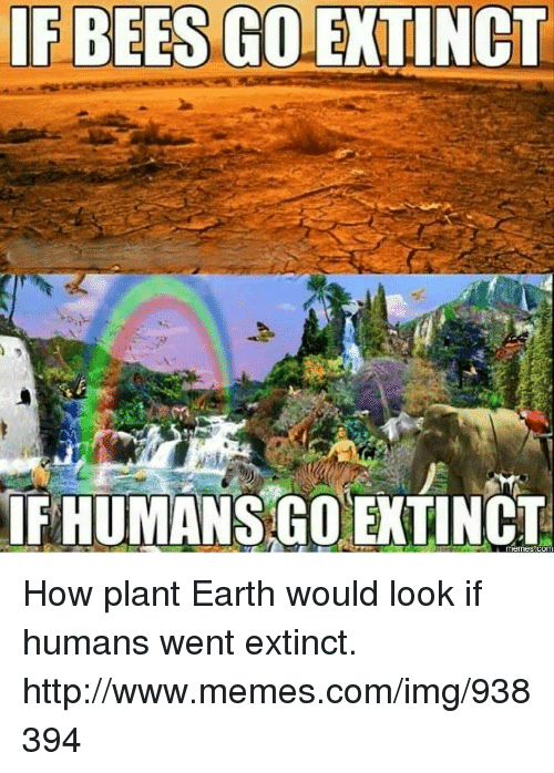 if-bees-golextinct-fhumansgo-extinct-com-how-plant-earth-would-16492233