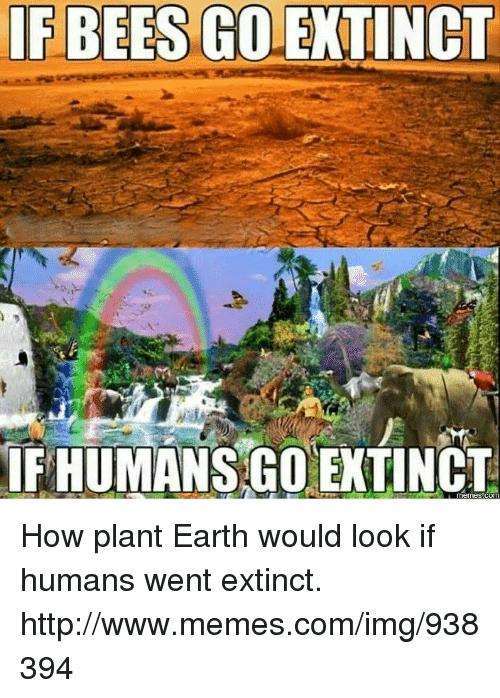 if-bees-golextinct-fhumansgo-extinct-com-how-plant-earth-would-16492233