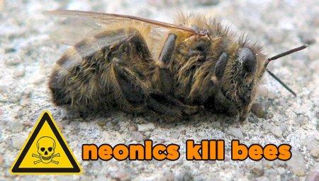 neonics-kill-bees.jpg